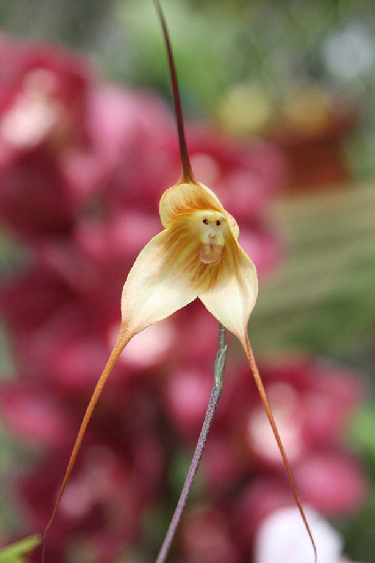 new_flowers-look-like-animals-people-monkeys-orchids-pareidolia-4