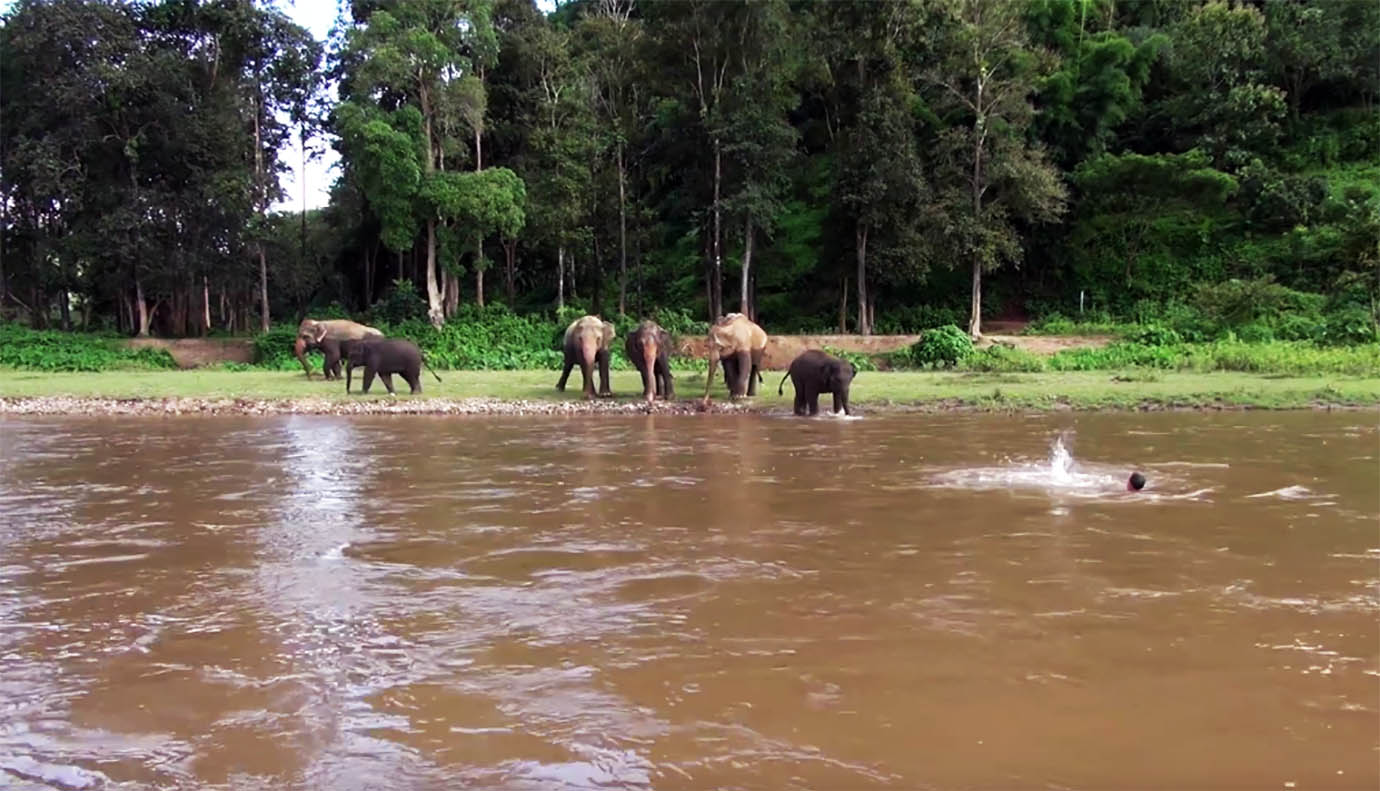 elephant-river-rescue