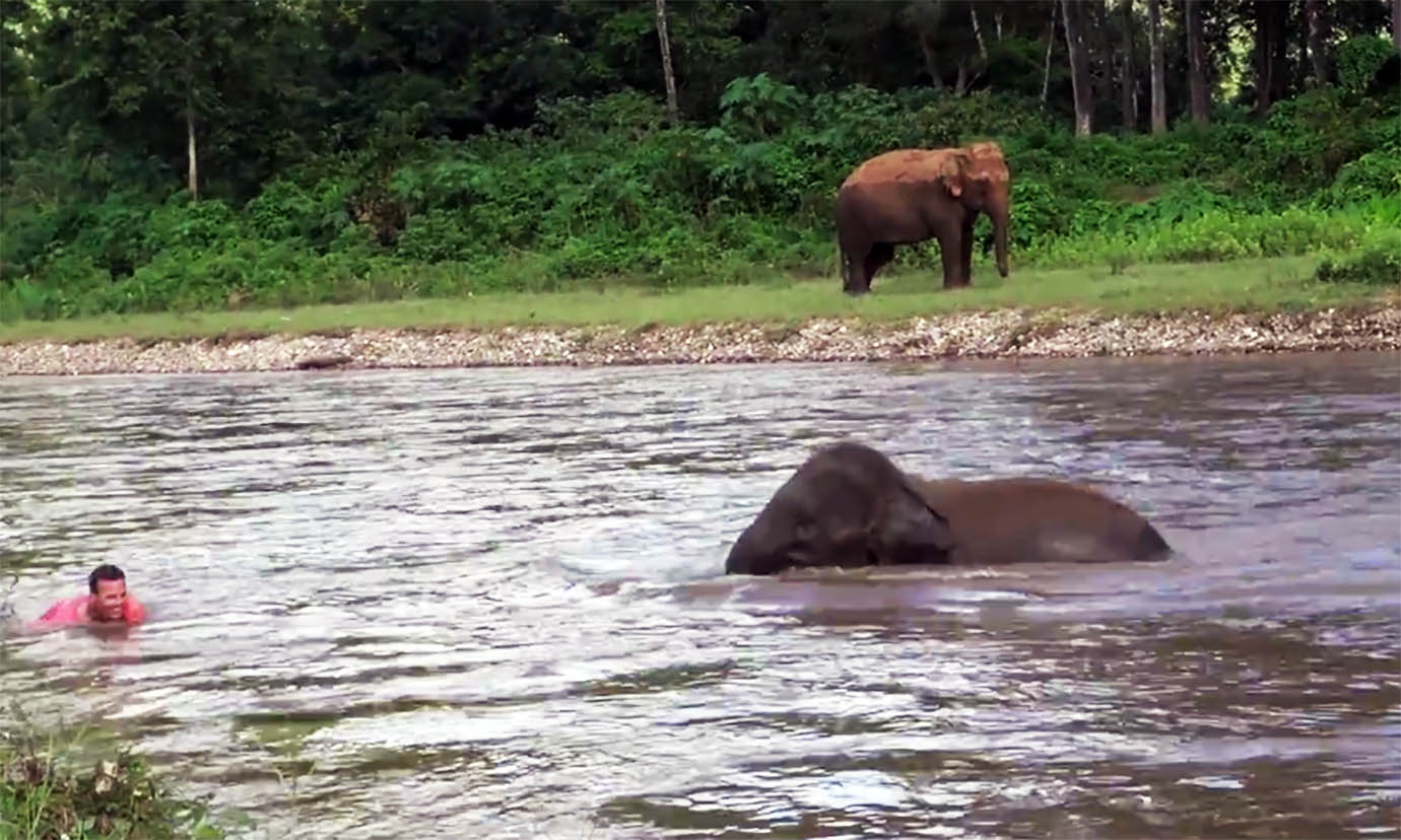 elephant-river-rescue2