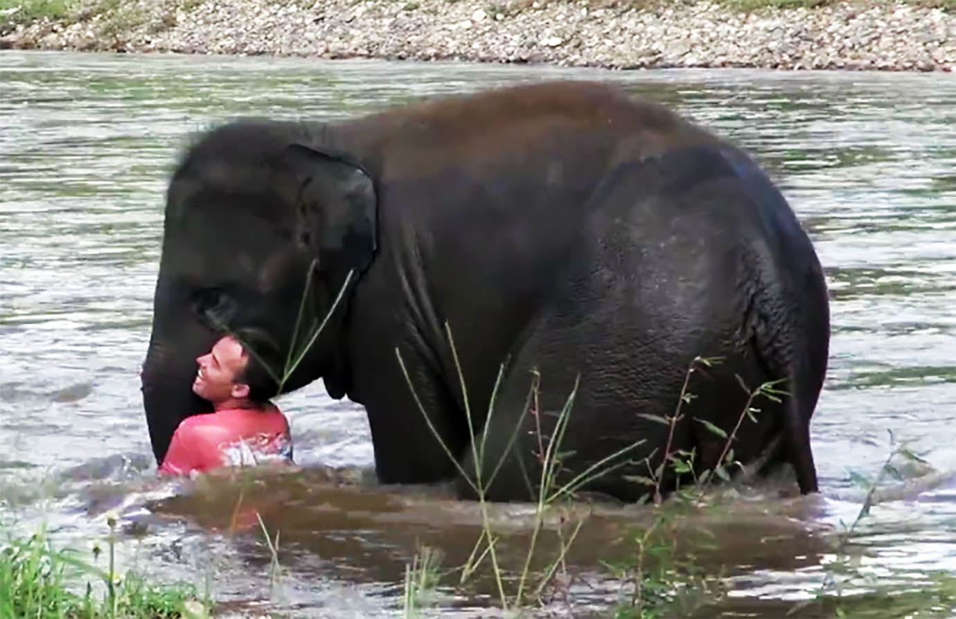 elephant-river-rescue3