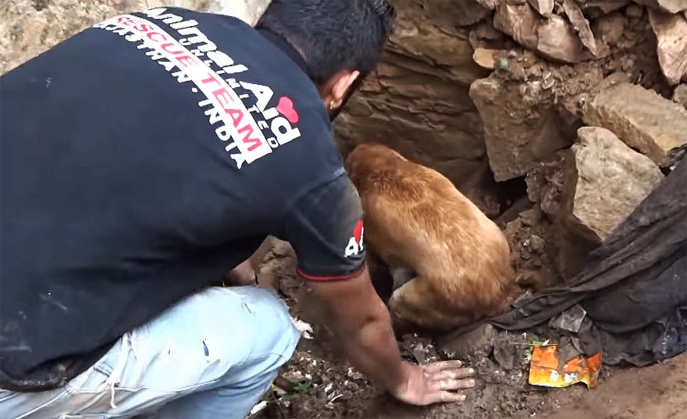 mother-dog-helps-rescuers-puppies1