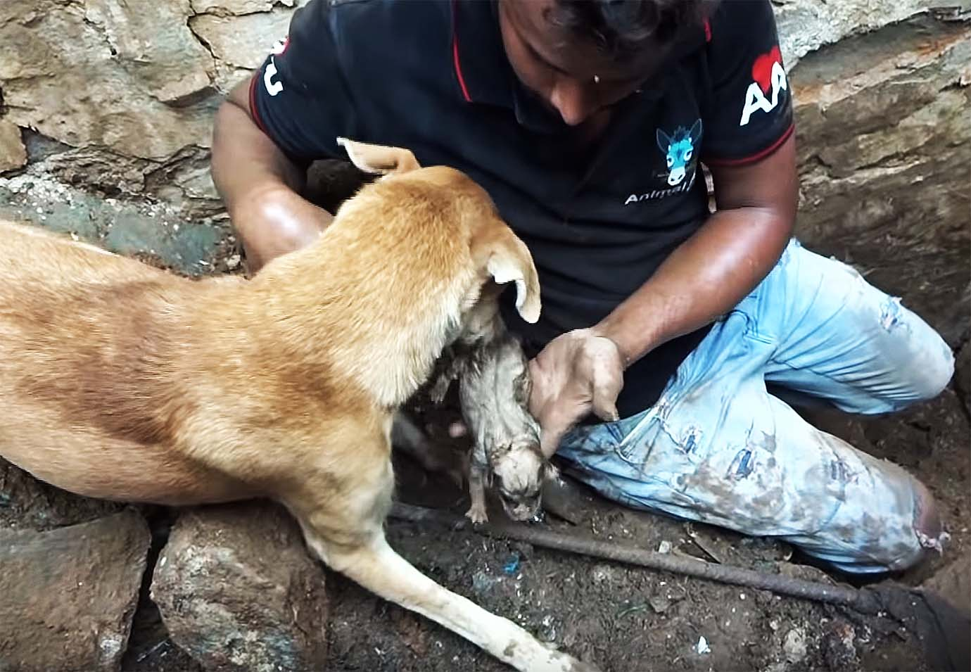 mother-dog-helps-rescuers-puppies3